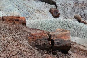 skamieniale-drewno